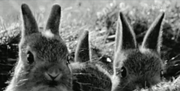 Rabbits in the Death Strip of the Berlin Wall
