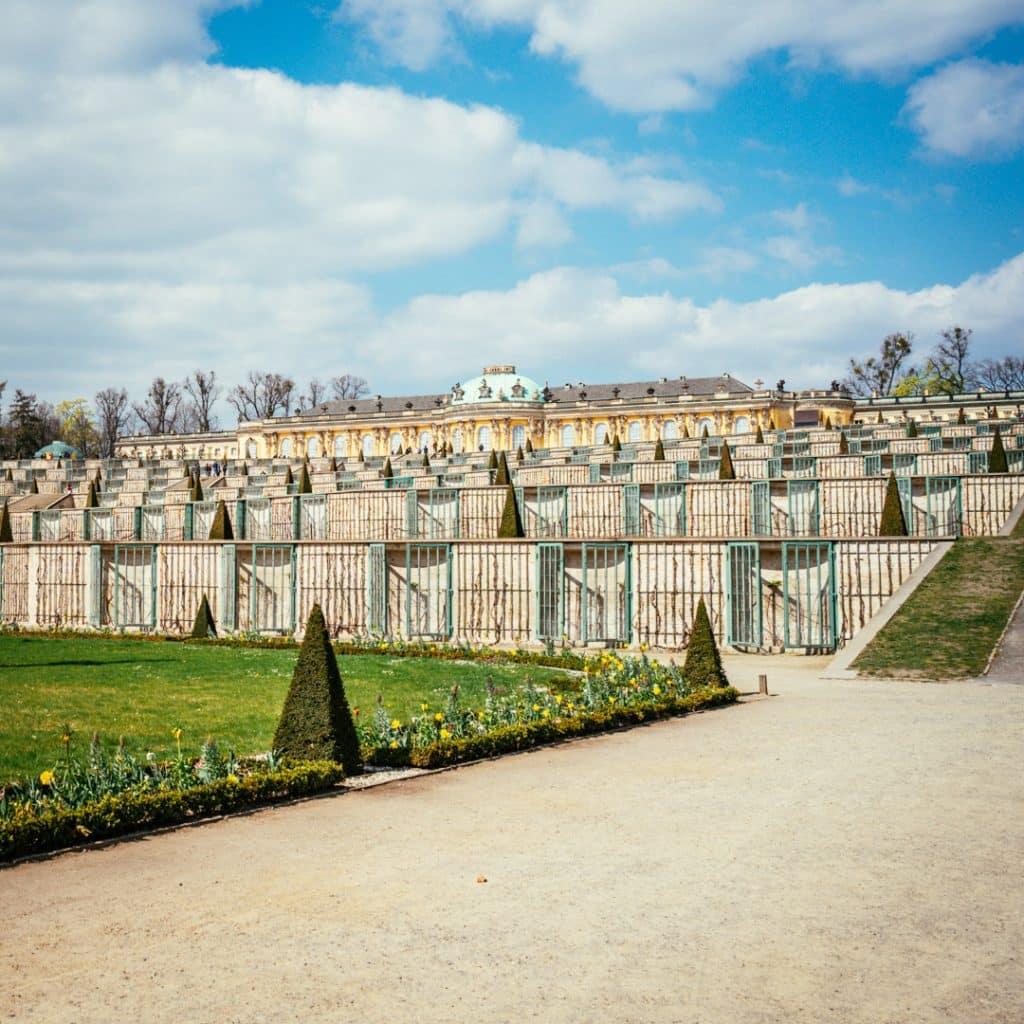 Vineyard at Potsdam Sanssouci