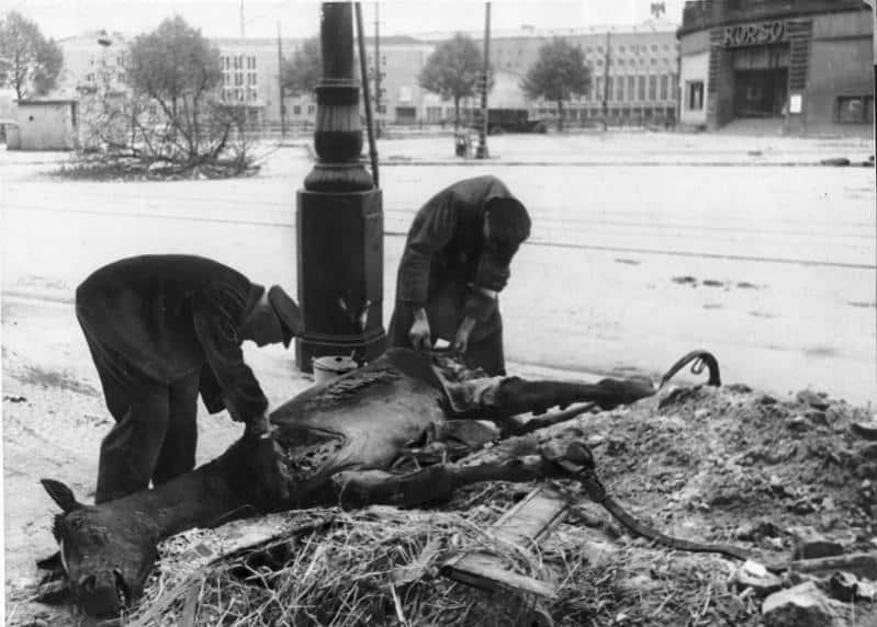 Men scavanging a dead horse in Berlin-Tempelhof in 1945 during the Battle of Berlin