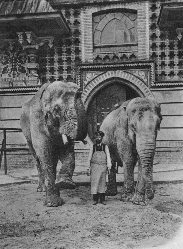 Siam the elephant at the Berlin zoo